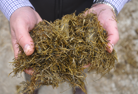 Silage in hands image listing