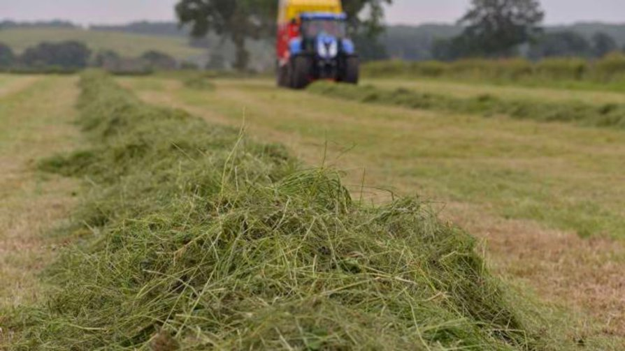 Silage cutting