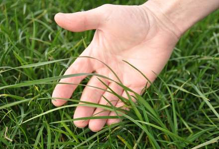 Grass in hand listing