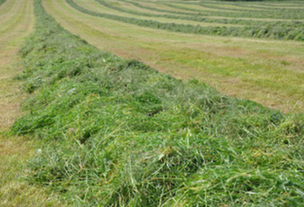Silage rows listing